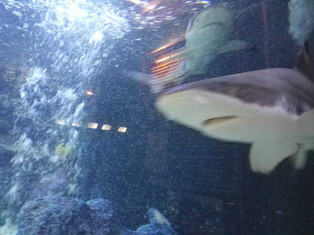 Photo Aquarium in Rayong Thailand 2017 (ラヨーン水族館), travel,akihikogoto.com