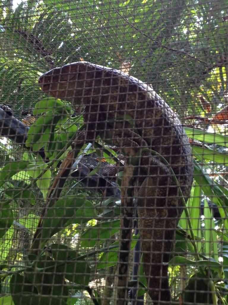 Chiang Mai trip, チェンマイ旅行, Thailand,akihikogoto.com, Chiang Mai Zoo, チェンマイ動物園