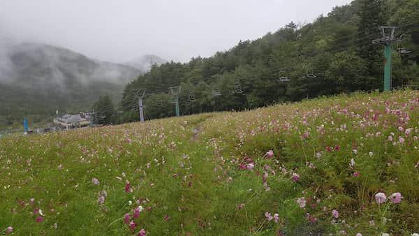 治部坂高原 コスモスガーデン,治部坂高原スキー場, akihikogoto.com
