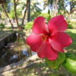 今日は散歩日和でした〜。#color #shape #flower
