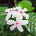 名前も知らないキレイな花。#color #shape #flower