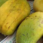 見た目はあまり良くないけど、薫りと甘みがたかいおいしいマンゴーをいただきました。これはスゴイ皆さん素敵な週末をお過ごし下さい#color #shape #mango