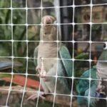 5SEC 530 – Birds, Bangkok,Thailand, April 2020
